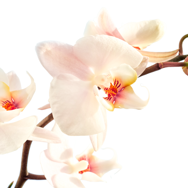 Orchidee by Ludo Annaert | Florale Vormgeving